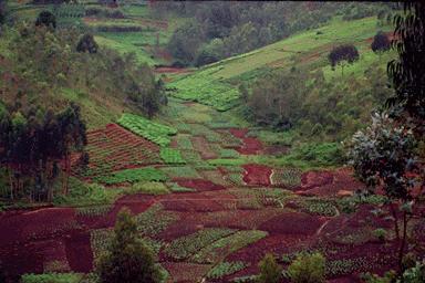 collines-du-burundi-cochet.png