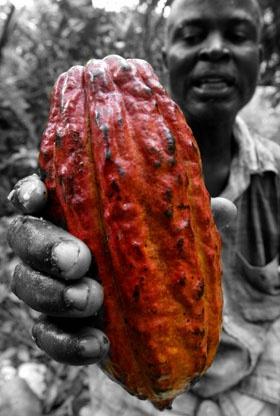 cocoa-cote-divoire-reuters3