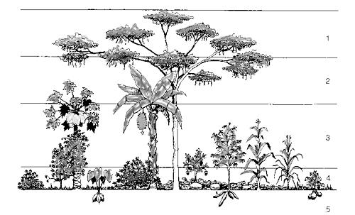 junglegarden1