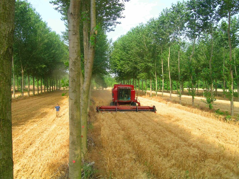 Agriculture forestière
