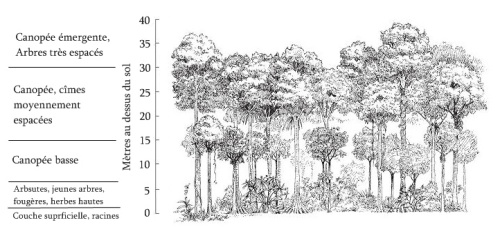 rain_forest_stratification1
