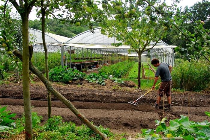 Le mara chage en permaculture est viable conomiquement for Rendement permaculture