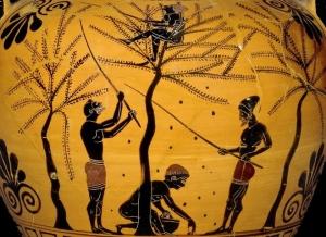 Farming-vase-olives